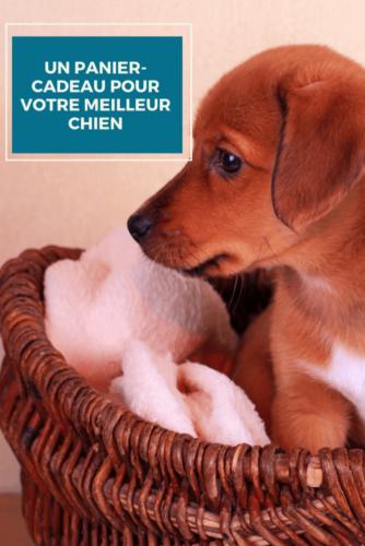 Un panier-cadeau pour votre meilleur chien